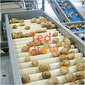 Potato-sorting-machine